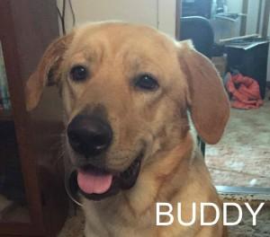 Buddy6