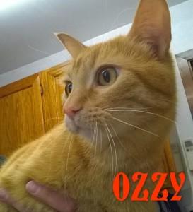 OZZY5