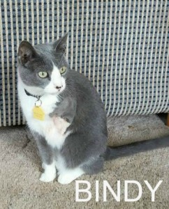 bindy ADOPTED