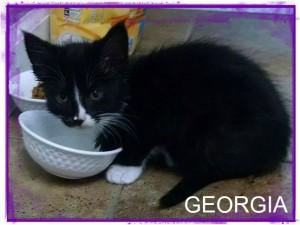 georgia kitten4