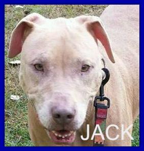 jack8
