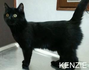 kenzie1