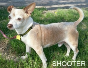 shooter ADOPTED