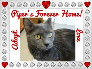 piper forever home