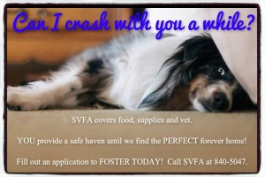 svfa foster help
