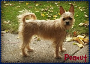 peanut1