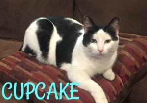cupcake 5(1)