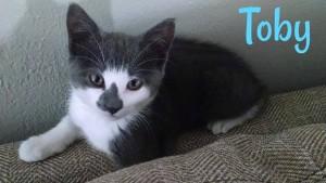 toby kitten2(1)
