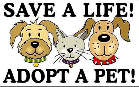 Sheyenne valley friends of animals svfa official website svfa meet greet schedule meet greets will not be held if we do not have any dogs currently available for adoption please check this site for adoptable m4hsunfo